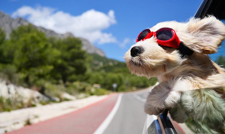 car-too-hot-dog